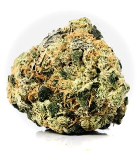 """a large multi-colored bud DSCT by curio exhibiting light to dark green leaves, resinous amber stigma/pistils/""""hairs"""" and a blanket of crystalline trichomes on the surface"""