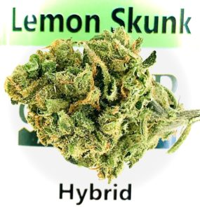lemon skunk by sunmed growers in front of label