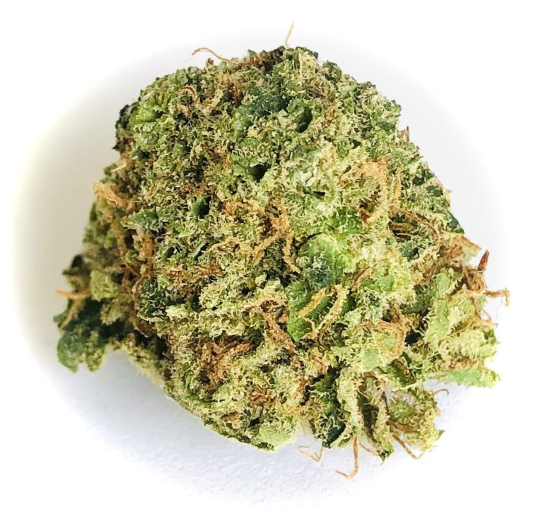 bud of Ray Charles by Grassroots