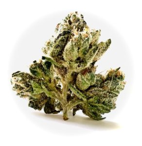 bud of yuck mouth