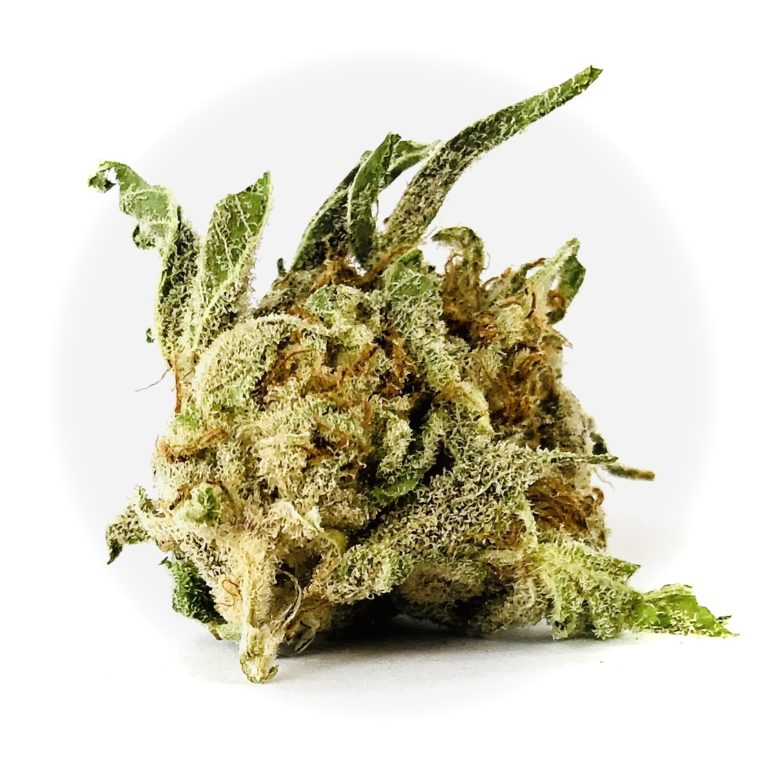 bud of Secret Weapon strain by Harvest
