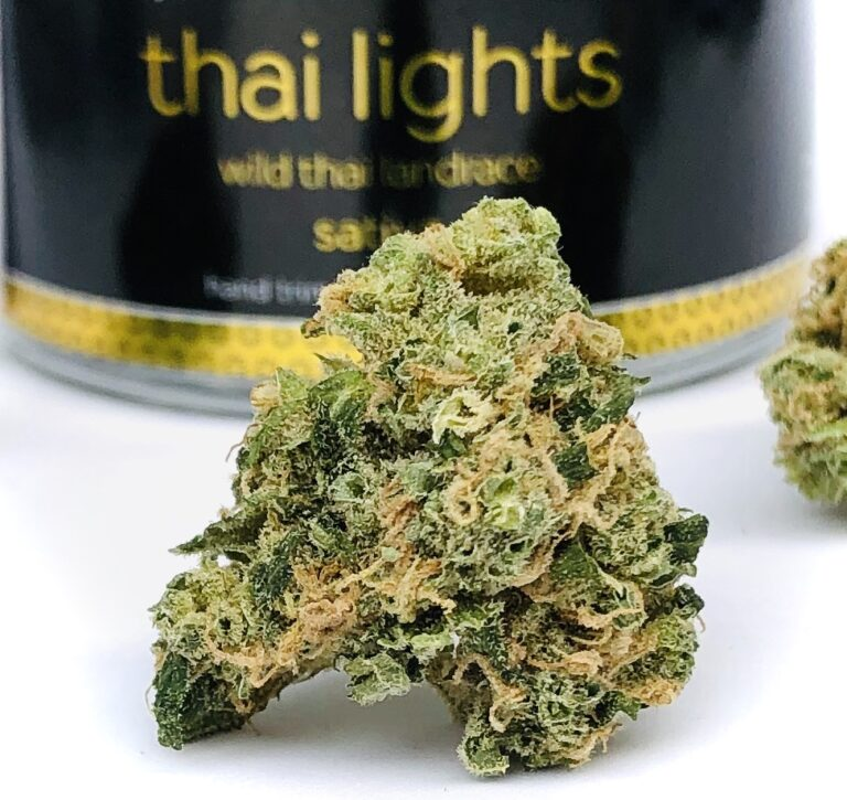 a beautiful green bud of Thai Lights by Verano
