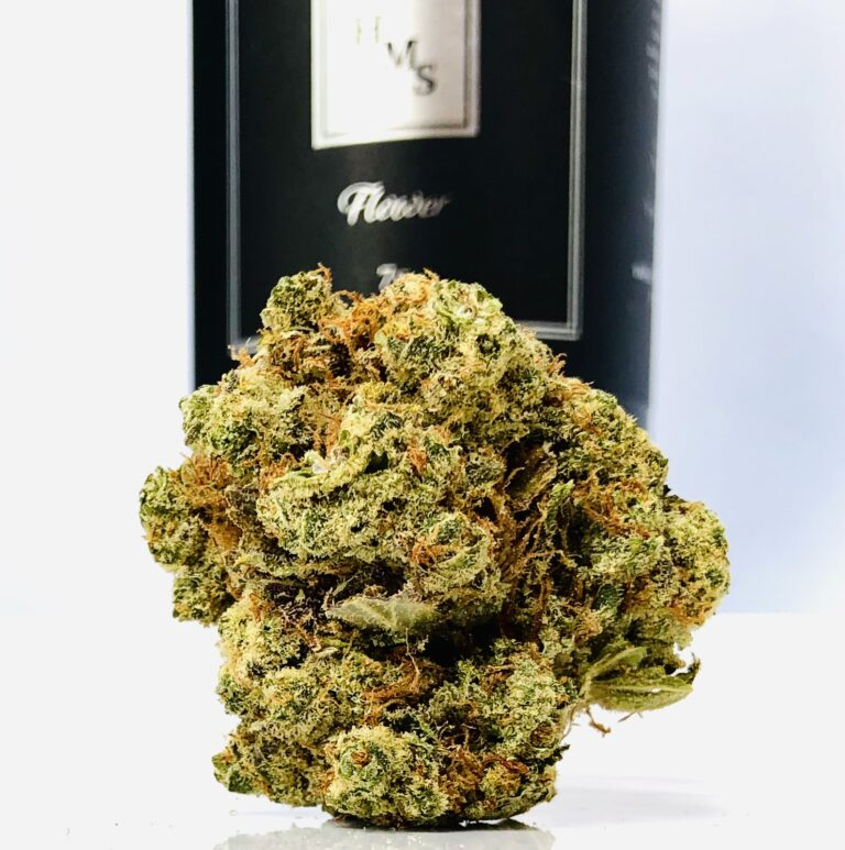 round bud of afghani strain in foreground with black hms container blurred all on a white background