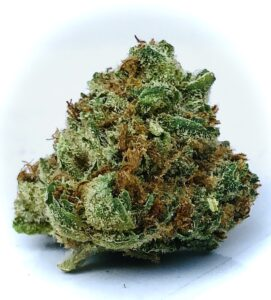 solitary bud of evermore airborne skunk