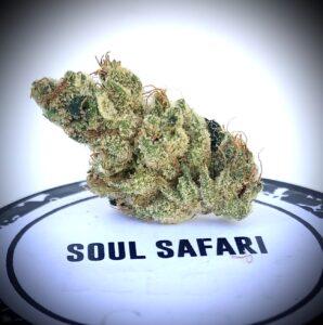 cookie shaped soul safari bud on culta lid