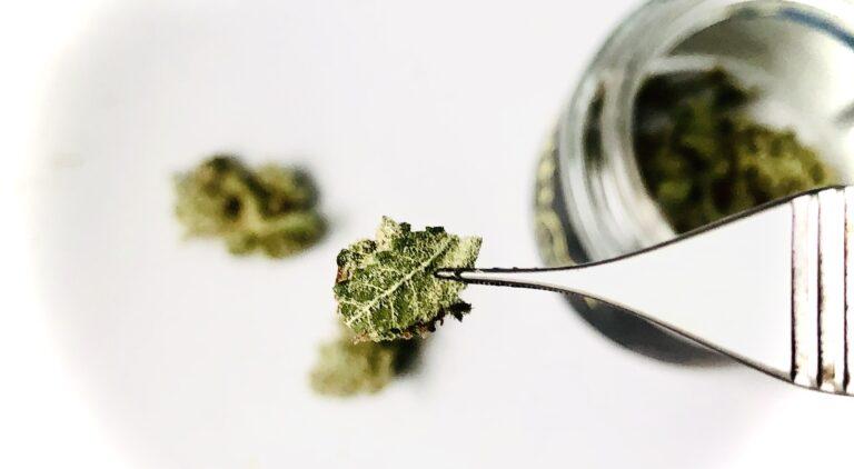 micro-dosing cannabis 9