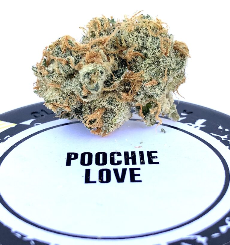 beautiful bud of poochie love with rust colored stigma on poochie love by culta label