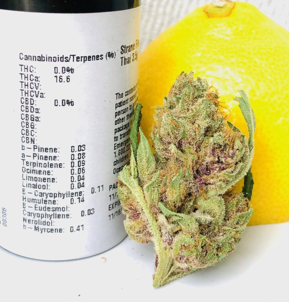 bud of lemon thai standing vertical leaning against a lemon rind and next to its container showing potency and terpene label by strane