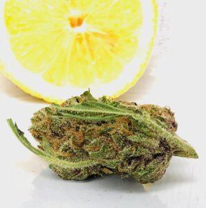 closer photo of lemon thai in front of lemon slice