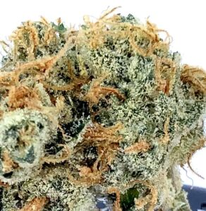 detail image of poochie love strain by culta with clumps of rust colored stigma and white crystalline trichomes