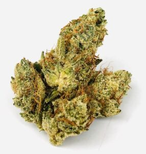a beautiful bud of chem 91 x ad by grow west