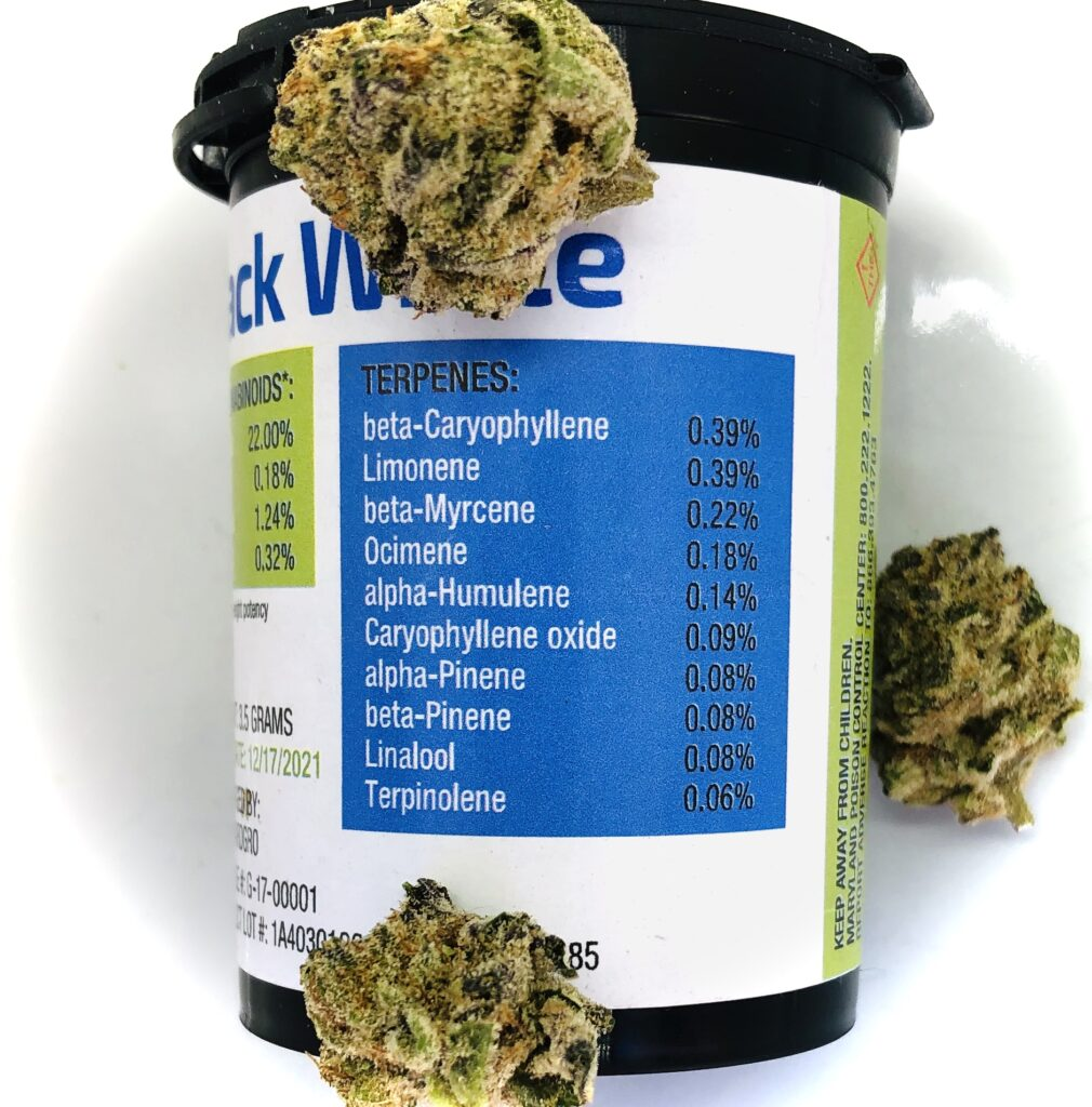blue terpene label on forwardgro container with buds of jack white strain arranged randomly around it