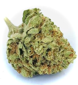 bright green bud of pineapple kush with red pistils