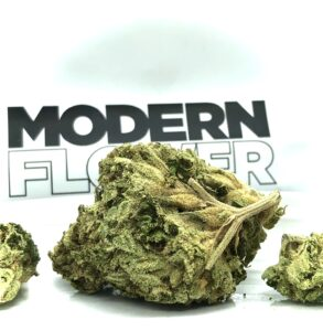 closer look at largest bud in eighth of element by modern flower