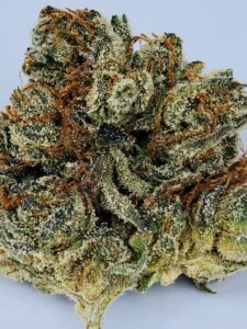 detail of trichomes and pistils on chem 91 x ad bud by grow west