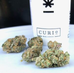 gorgeous buds of raven by curio with curio container