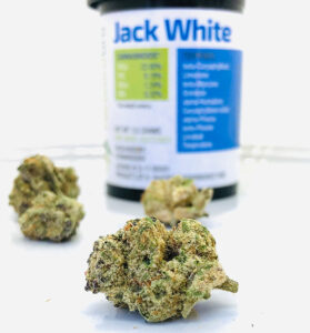 jack-white-bud-in-front-of-forwardgro-container