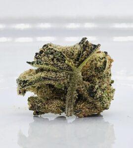 underside of jack white strain bud