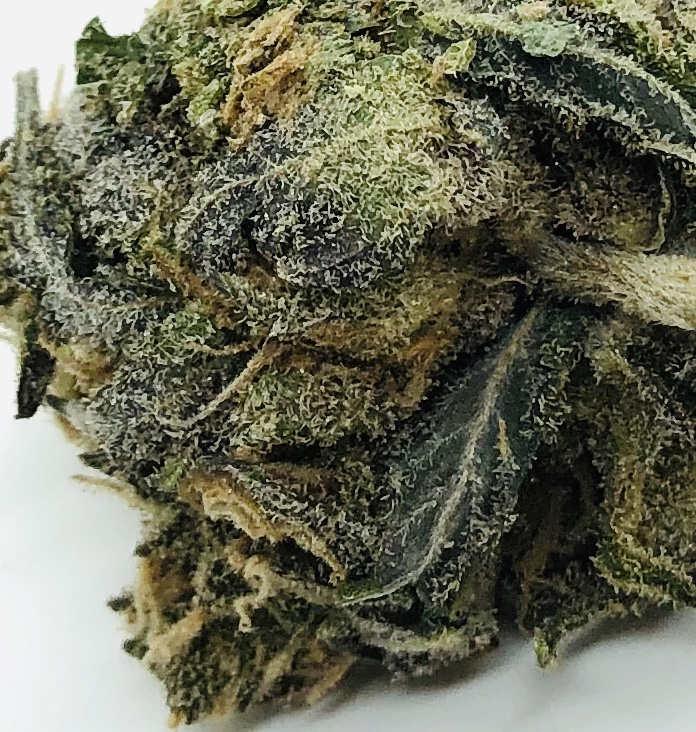 detailed image of bud of bluniverse by grow west