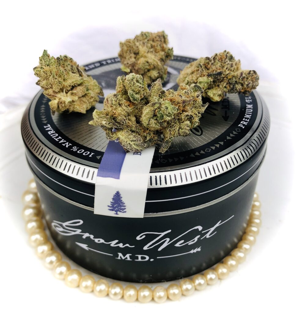grape pearls strain on grow west container with string of pearls around the bottom of tin