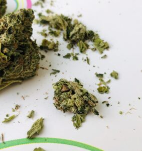 seed inside of bud of island sweet skunk x sour diesel by gleaf
