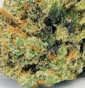 very detailed photo of gelato bud surface exhibiting milky yellow trichomes and orange pistils