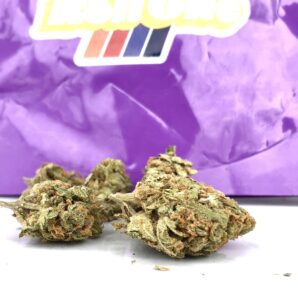 a conical shaped bud of critical sensi star next to another more scraggily bub in front of the roll one purple ziplock container