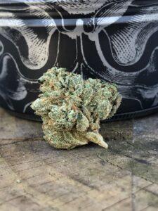 gorgeous dark green bud of triangle kush by grow west