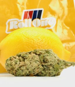 large elongated bud of lemon kush headband by roll one