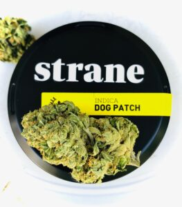 bud of dog patch strain on lid of Strane cannister