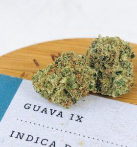 detail closeup of guava ix strain buds