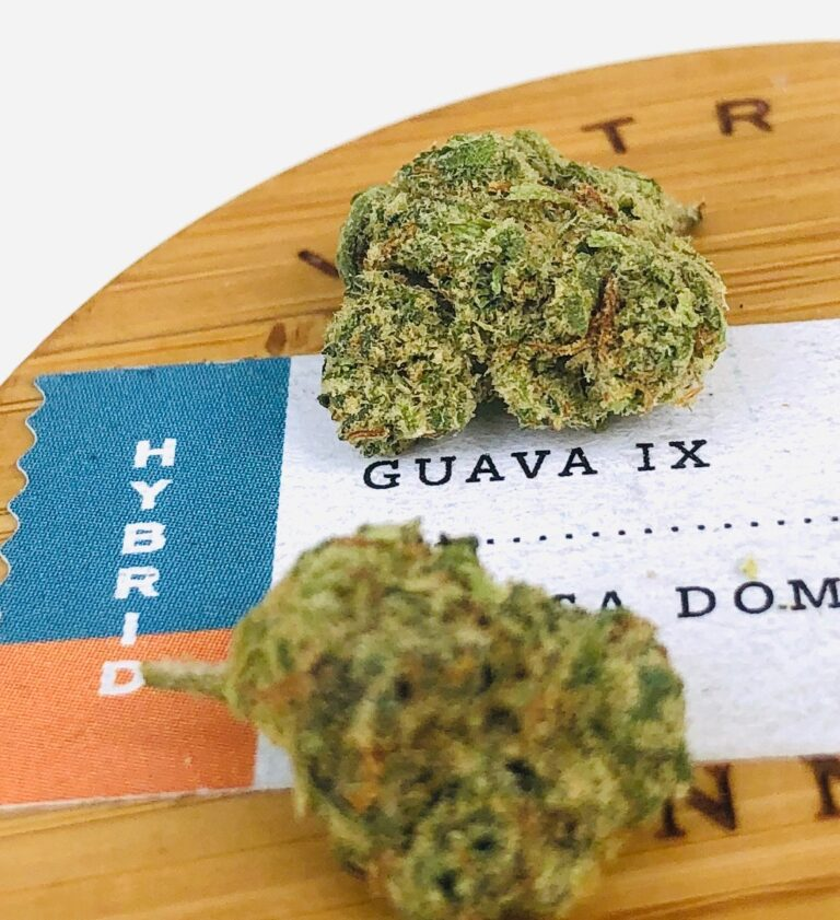 detail photo of guava ix strain buds on lid