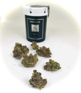 sitting bull strain buds in front of HMS container