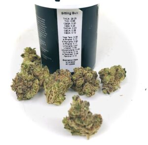 vignette photo of buds of sitting bull strain by hms