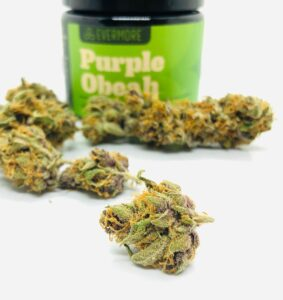 bud of purple obeah with other buds behind