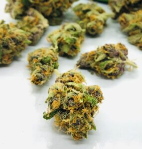 buds of purple obeah