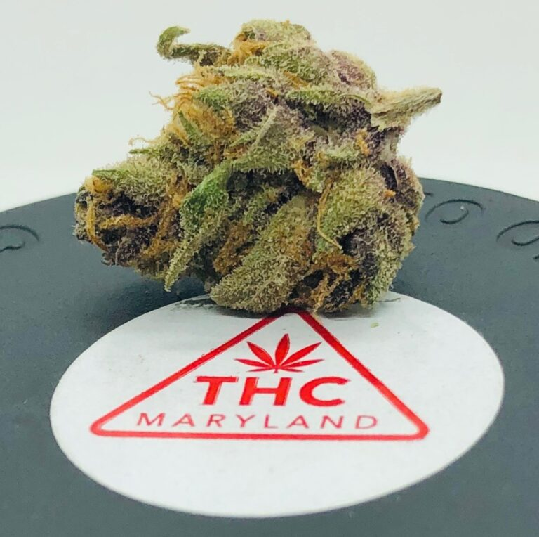 closeup of purplish and greenish bud of purple obeah on maryland thc sticker on black lid