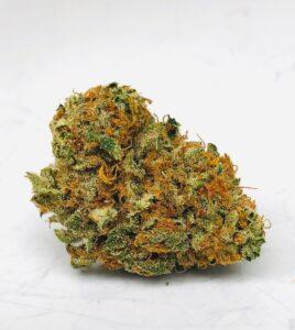 gorgeous bud of shoki x 87 limepop by curio