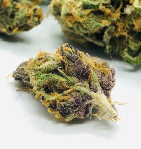 purple coloring shown on bud of purple obeah by evermore