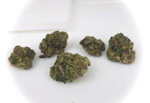buds of gummiez in a row